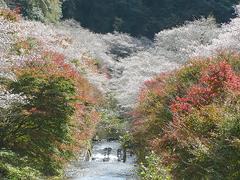田代川見どころスポット