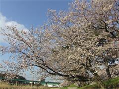 乙川と伊賀川の合流点