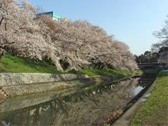 乙川と伊賀川の合流点その2