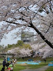 岡崎城(伊賀川から)