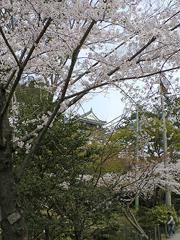岡崎城その2(伊賀川から)