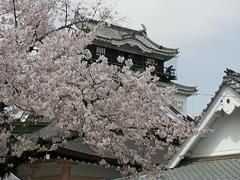 岡崎城(龍城神社脇から)