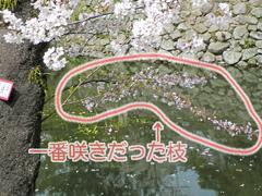 一番に咲いた枝は今...