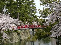 神橋と桜その2