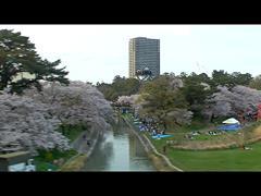 電車の窓から写した岡崎公園の桜