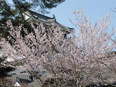 龍城神社庭園の桜。