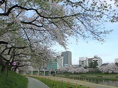 乙川殿橋付近