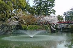 龍城掘(神橋と桜)