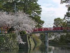 龍城掘その2(神橋と桜)